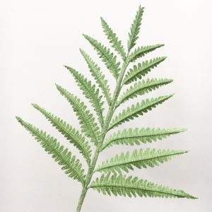 paper fern, fern, greenery, petal and bird, paper foliage