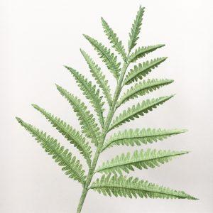 paper fern, fern, greenery, petal and bird, paper foliage